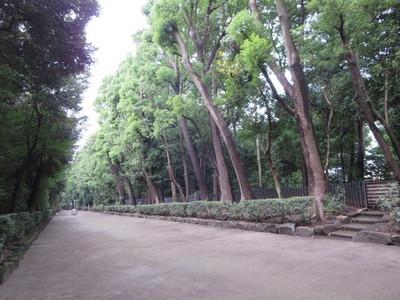 01井草八幡宮 (5).JPG