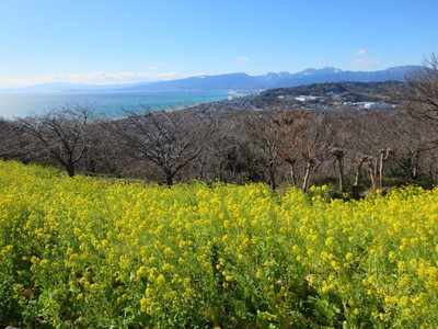 01吾妻山公園 (32).JPG