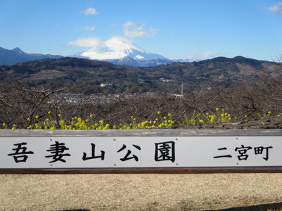 01吾妻山公園 (40).JPG