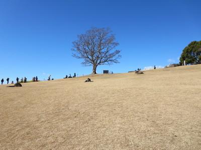 01吾妻山公園 (46).JPG