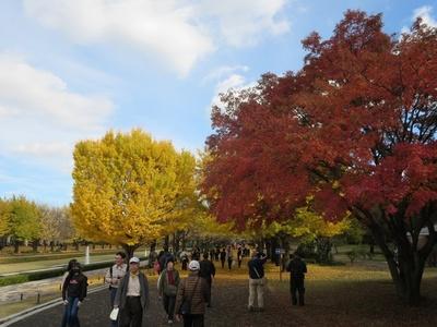 01昭和記念公園 (11)a.jpg