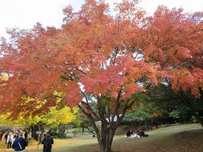 01昭和記念公園 (12)a.jpg
