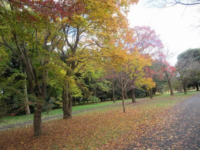 01昭和記念公園 (24)a.jpg