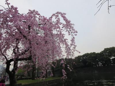 01皇居乾通り (3).JPG