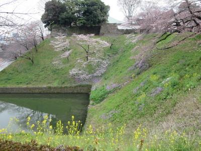 02北の丸公園 (33).JPG