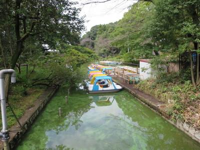 02善福寺公園 (1).JPG