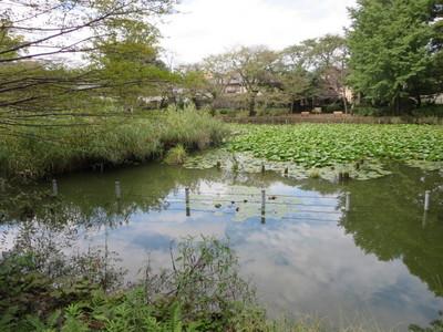 02善福寺公園 (33).JPG