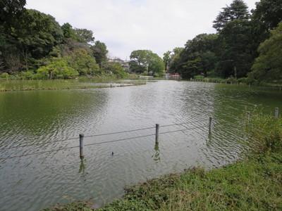 02善福寺公園 (8).JPG
