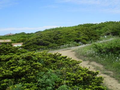 07焼尻島 (13).JPG