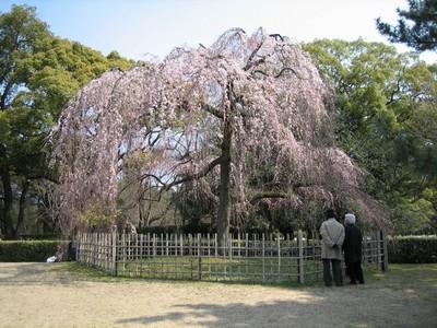 085京都御苑a.jpg