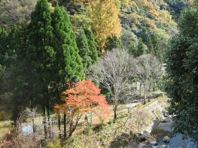 158自然歩道 (32)a.jpg