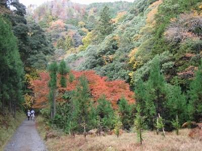 158自然歩道 (4)a.jpg