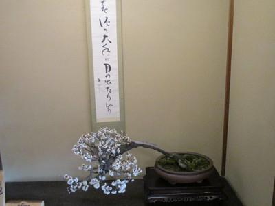 19長浜盆梅展 (29).JPG