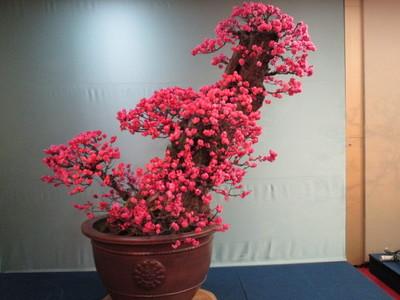 19長浜盆梅展 (33).JPG