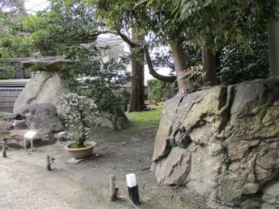 19長浜盆梅展 (4).JPG