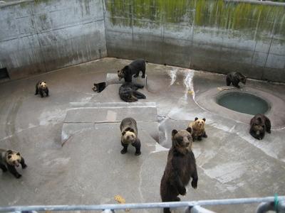 219熊牧場.jpg