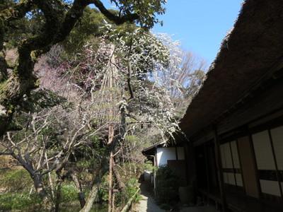 百草園 (13).JPG