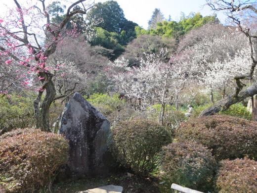 百草園 (2).JPG