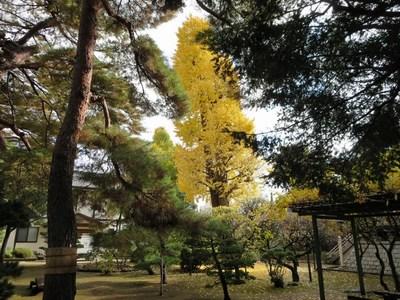 2014.11.30平林寺 013-2.jpg